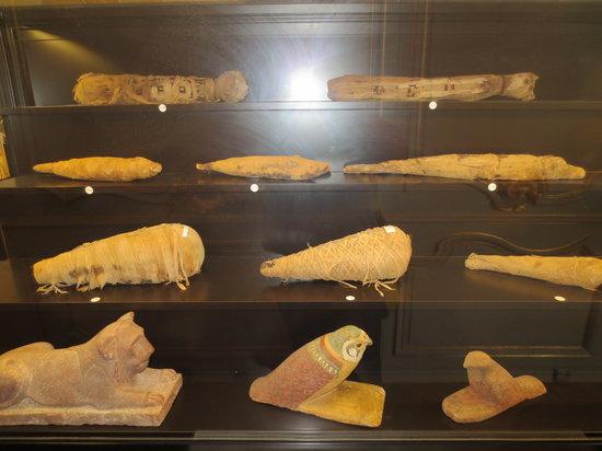 Musee Calvet: Tier Mimien