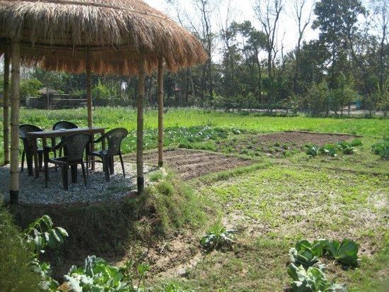 Hotel Monalisa Chitwan: De nieuwe zitjes met uitzicht groentetuin