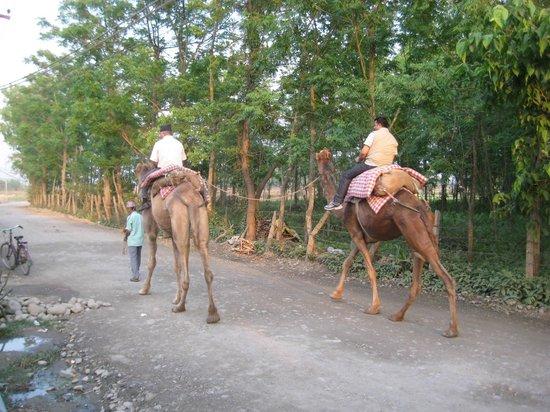 Hotel Monalisa Chitwan: Gratis kamelentocht voor gasten