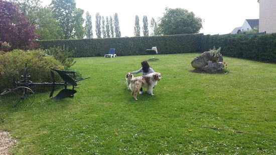 Paris Côté Jardin: The beautiful yard with the friendly dogs