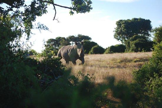 聖瓦里野生動物保護區照片