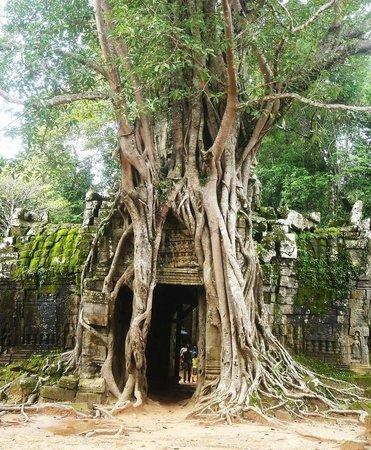 Sun Sothy Guesthouse: Tempel