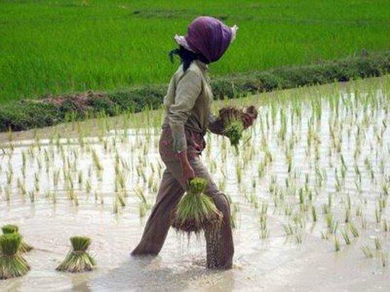 Sun Sothy Guesthouse: Farmers