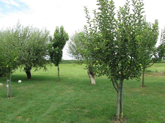 Agriturismo B&B Gallo Nero : Giardino sul retro vicino al frutteto