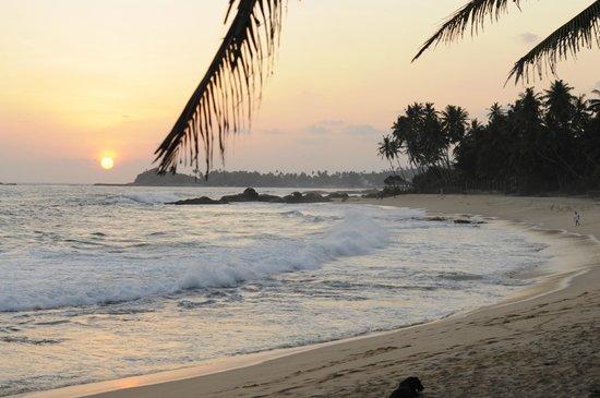 Dalawella Beach Resort: пляж возле отеля
