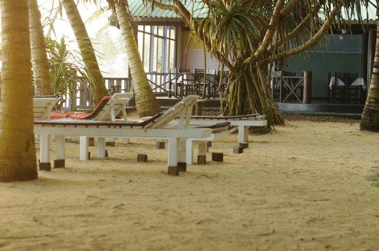 Dalawella Beach Resort: лежаки и ресторан