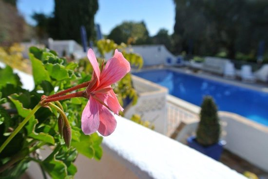 Quinta Bonita Luxury Boutique Hotel: View on the pool