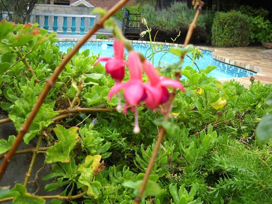 Mont Fleur - Wilderness: pool