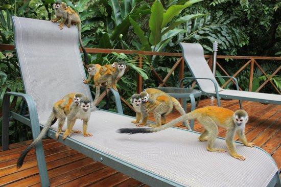 Hotel Plaza Yara: Monkeys by the pool