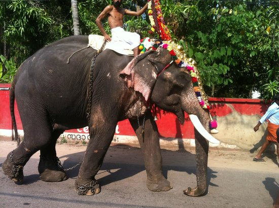 Colonel's Homestay : elephant in front of the house