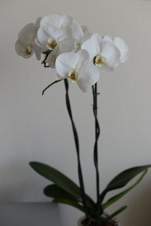 Xcelsus: Живые цветы