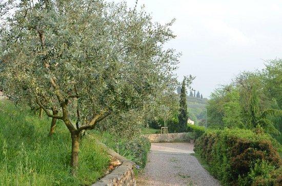 Agriturismo Sommavalle - garden