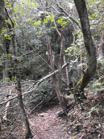 Fernkloof Nature Reserve: forrest