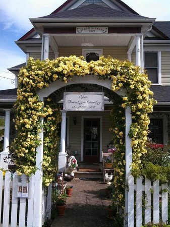 The Painted Lady Bed & Breakfast and Tea Room: Banks Rose greets you at The Painted Lady