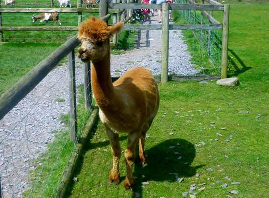Dwyfor Ranch Rabbit Farm and Animal Park: Who are you calling Ginger?