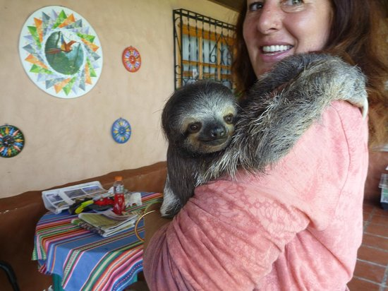 Toucan Rescue Ranch : Leslie showing us the differences in two and three toed sloths