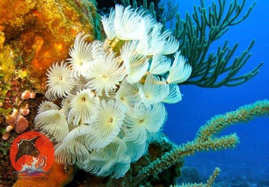 Manta Raya Divers