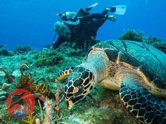 Manta Raya Divers: Dive pic