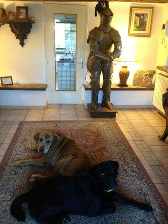 Le Hommet-d'Arthenay, France : Duke & Ghost