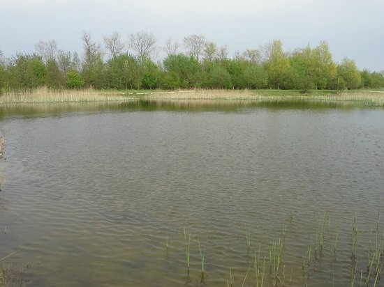 The Forest of Marston Vale - Forest Centre: The view from the cafe