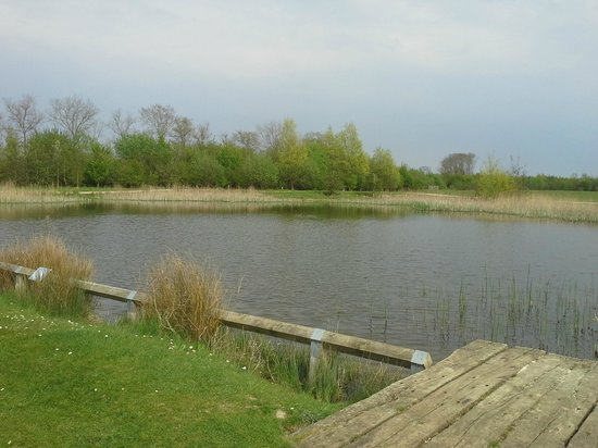 The Forest of Marston Vale - Forest Centre: Taken from the outdoor seating area