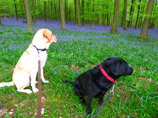 King's Wood: even the dogs appreciated them!
