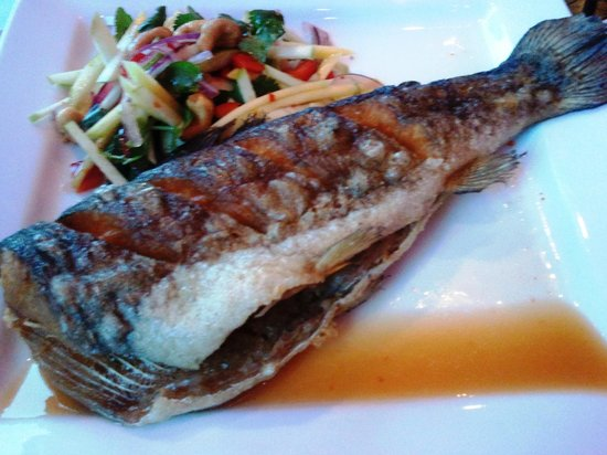 Chedi Thai Bistro: Chedi Thai Trout is divine