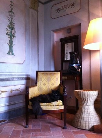 Il Paluffo - Main House B&B: notre chat très précieux a apprécié son séjour