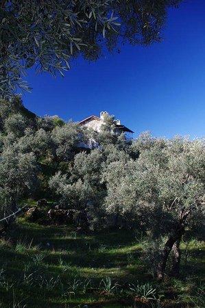 Hotel Silva Oliva: House in Olive Grow