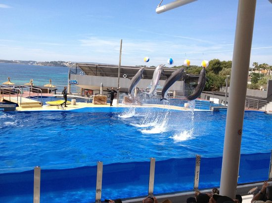 Marineland Majorca: part of the dolphin show