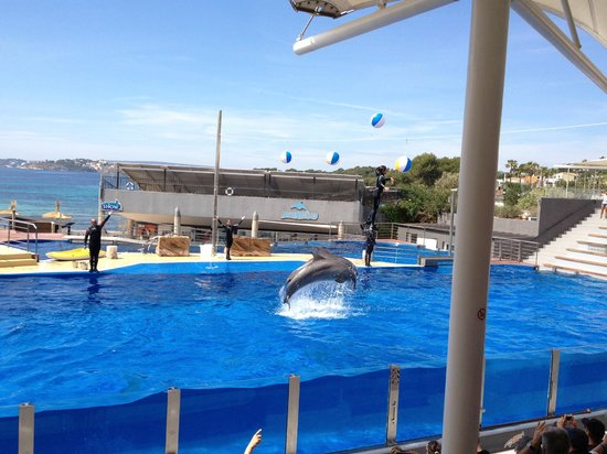 Marineland Majorca : dolphin show