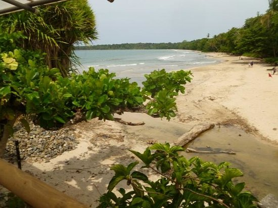 Cahuita National Park Hotel : View from porch near our room.