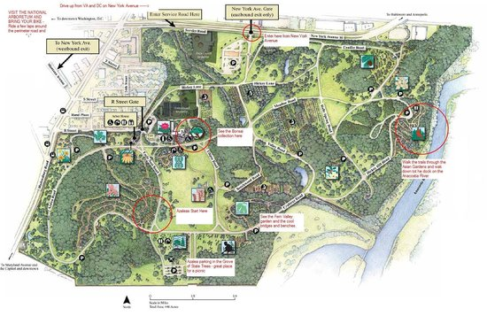 Arboretum Annotated Bike Map Picture Of US National Arboretum - Us map of dc