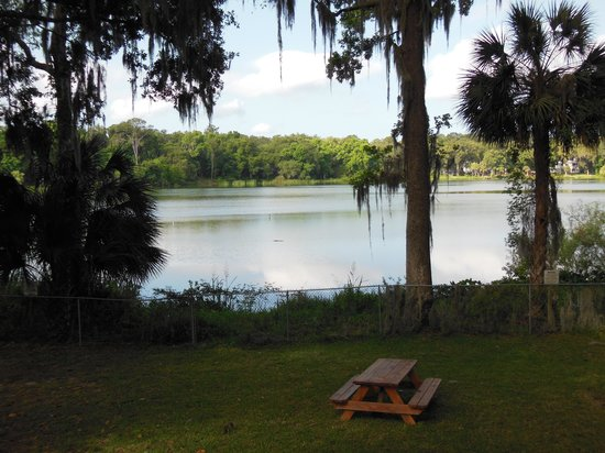 Wyndham Garden Gainesville: View of the lake