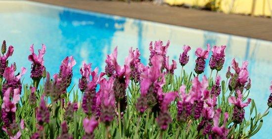 Casa das Campainhas: Garden & Pool