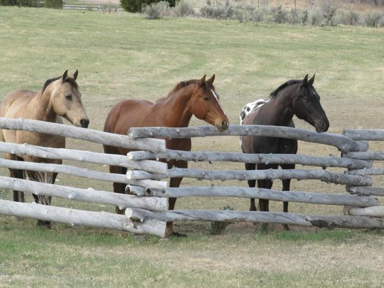 Cottonwood Meadow Lodge: neigh-bors