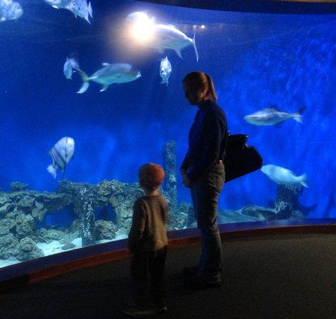 Newport News, VA: The Bay Aquarium