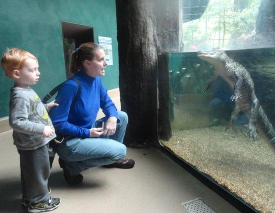 Newport News, VA: Hello Alligator