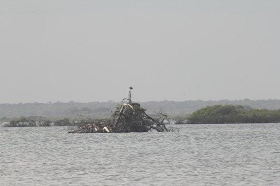 Diamante Maya Tours: Osprey nest