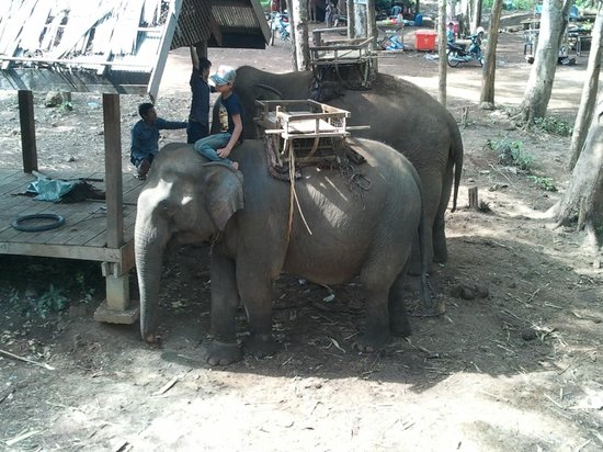 Ride On An Elephant : The place to start
