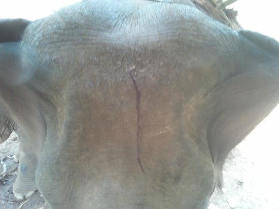 Ride On An Elephant : You see blood ?