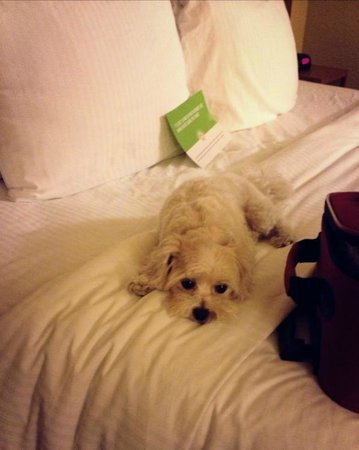 La Quinta Inn & Suites Chicago Tinley Park: The dogs approved