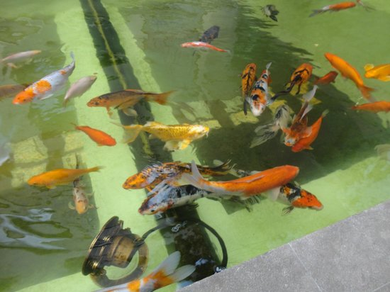 Leonardo Da Vinci: Fish outside reception