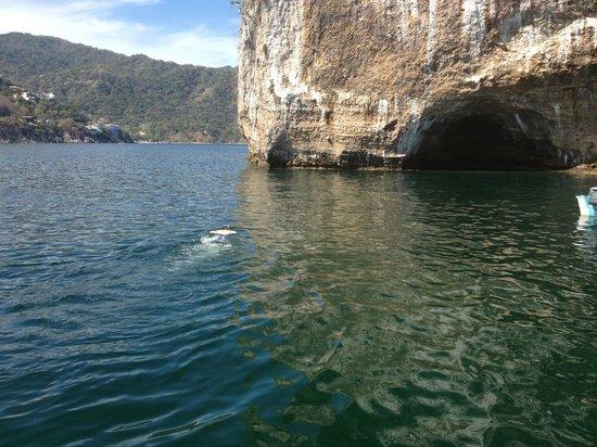 Diana's Tours: Snorkeling