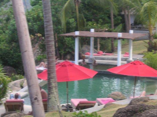 Jungle Club: Pool Area