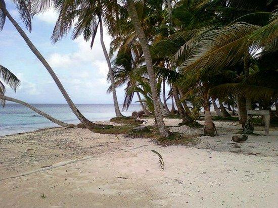 Región de Guna Yala, Panamá: Palmas de cocos de la isla de nubesidub