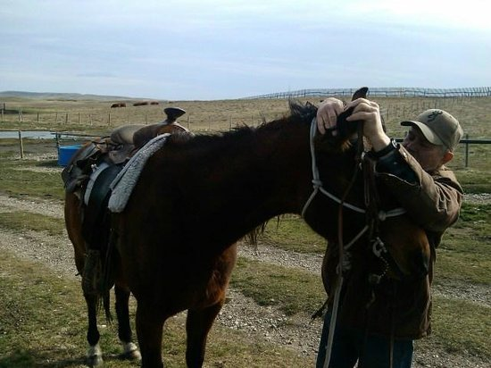 Mountain Meadow Trail Rides: Gears up the horse