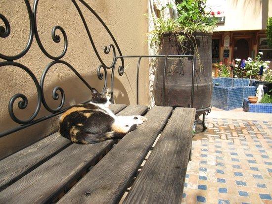 c5c0a3dc20f0 Ensemble Artisanalのベンチにいた猫。 snack Ensemble Artisanal pain · tatouage · petits  portes clés typiques