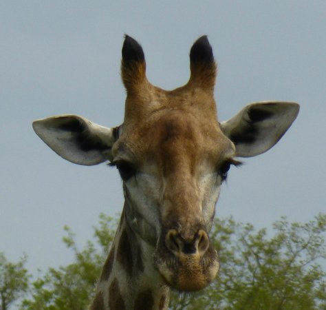 andBeyond Ngala Safari Lodge: Here's Lookin' at You!