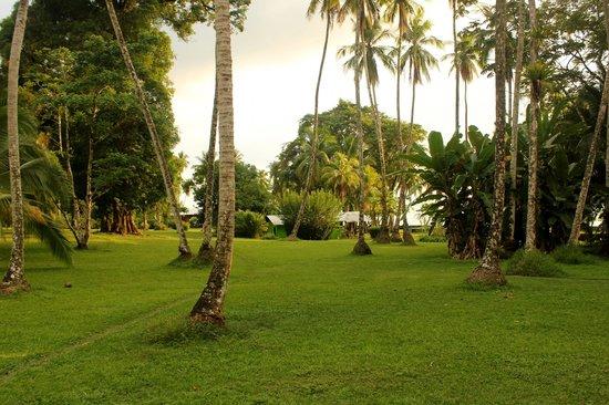 Saladero Eco Lodge: Saladero garden